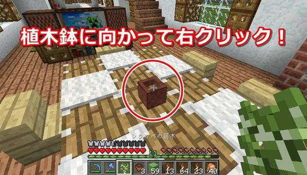 植木鉢への植え方