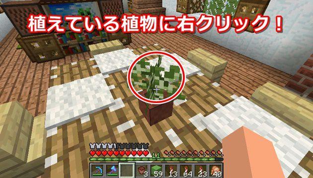 植えたものを取る方法