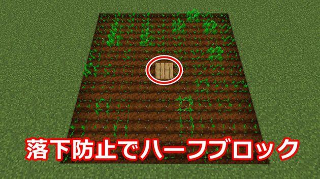 小麦の種を植える