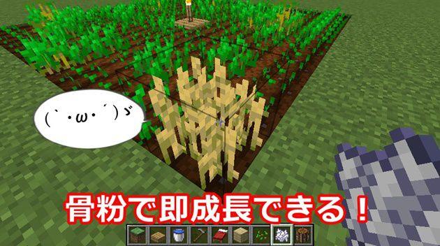 小麦は骨粉で成長を促進できる