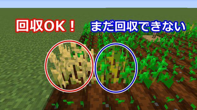 小麦の回収方法
