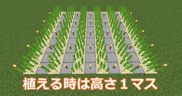 サトウキビの植え方