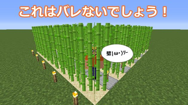 サトウキビ畑とオロオロKT