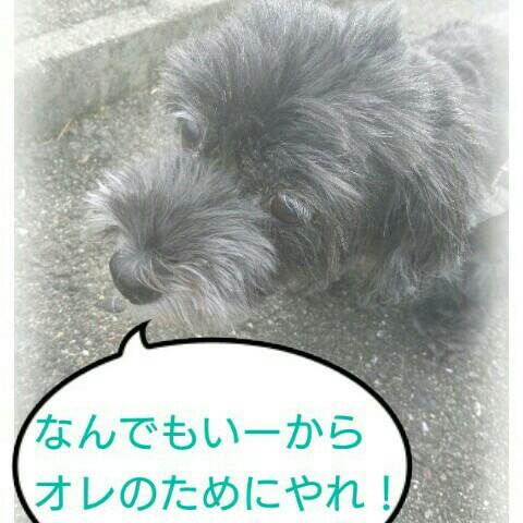 f:id:oroshinoie:20161011030608j:image