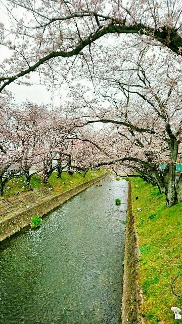 f:id:oroshinoie:20170407085441j:image