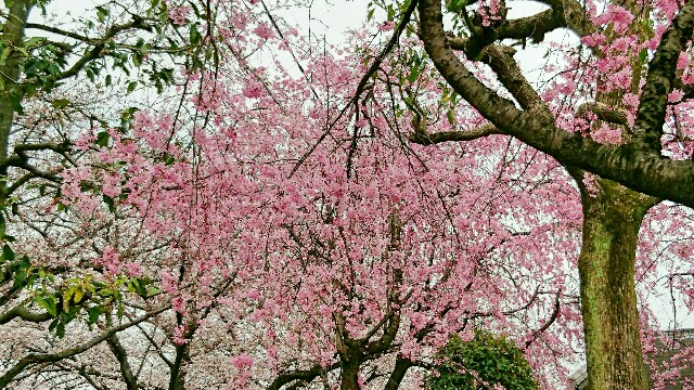 f:id:oroshinoie:20170407085600j:image