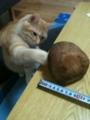 ねこパンチ from http://twitpic.com/1cbyys