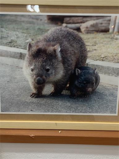 f:id:osaka-family:20190202204845j:image