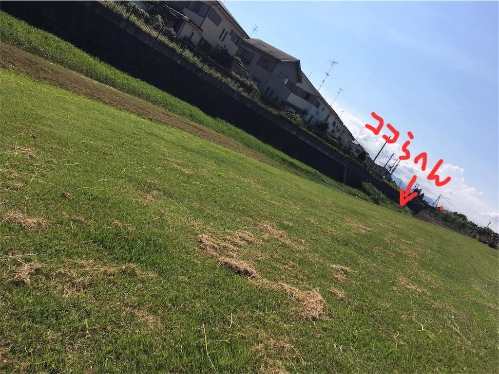 f:id:osakana-tokyo:20170711170337j:image