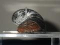 鉄のウロコを持つ貝「スケーリーフット」