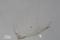 図5. トモエミノウミウシ(6.7mm)の顎板