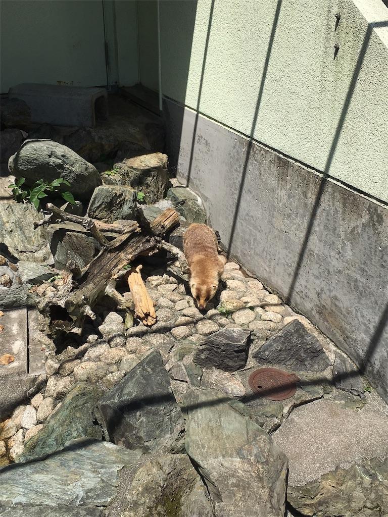 f:id:osakezukideotakunaocchan:20180521130355j:image