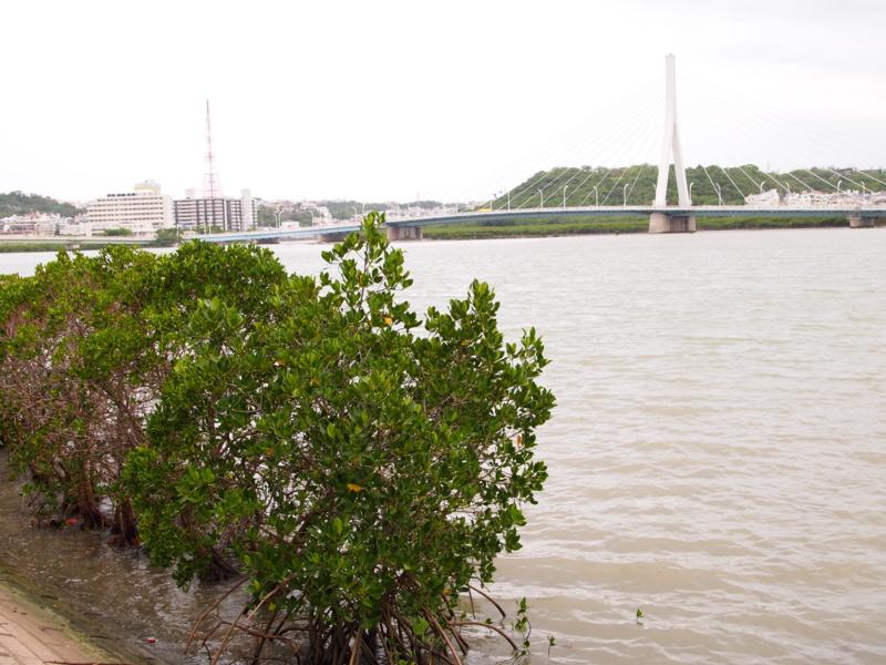 f:id:osamu-kurosaka:20110626145209j:image