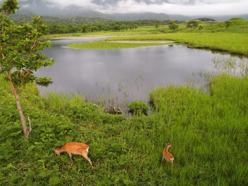 f:id:osamu-kurosaka:20110730171836j:image