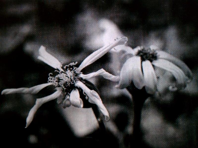f:id:osamu-kurosaka:20120115221105j:image