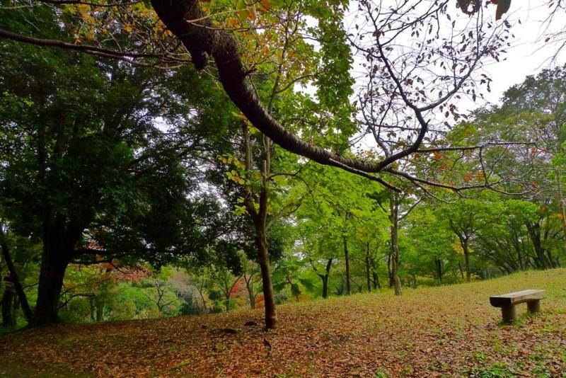 f:id:osamu-kurosaka:20141109153210j:image