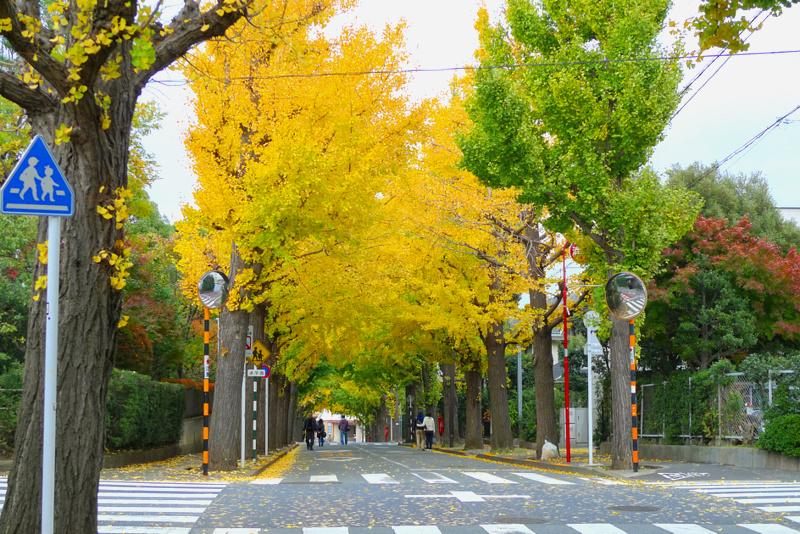 f:id:osamu-kurosaka:20141124211542j:image