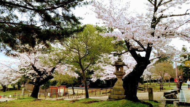 f:id:osamu-kurosaka:20170410170940j:image