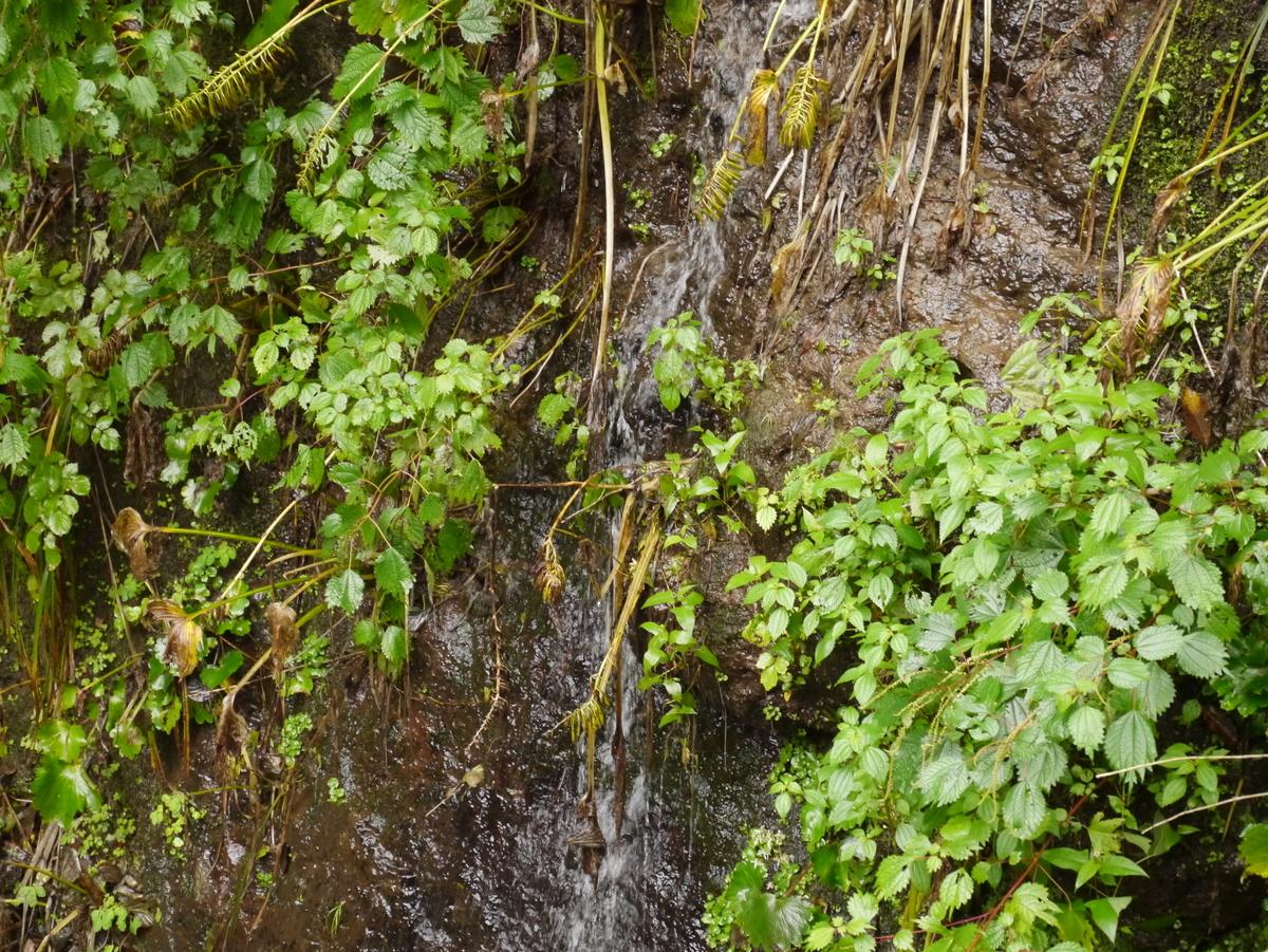 蓬平町 湧水が崖に沿って流れている画像
