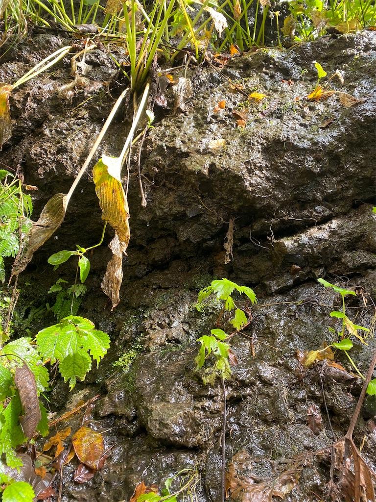 蓬平町 岩を伝う湧水の画像
