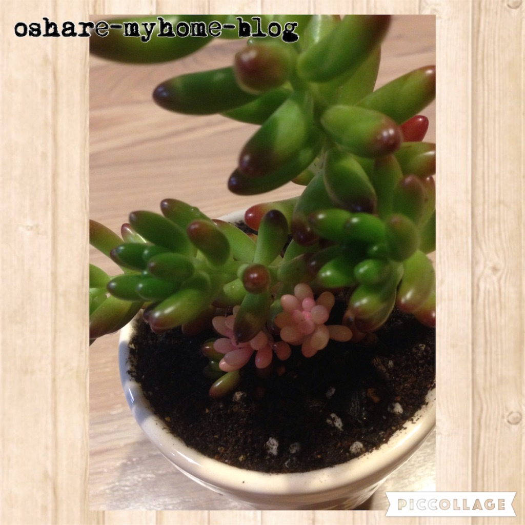 f:id:oshare-myhome-blog:20160530215928j:image