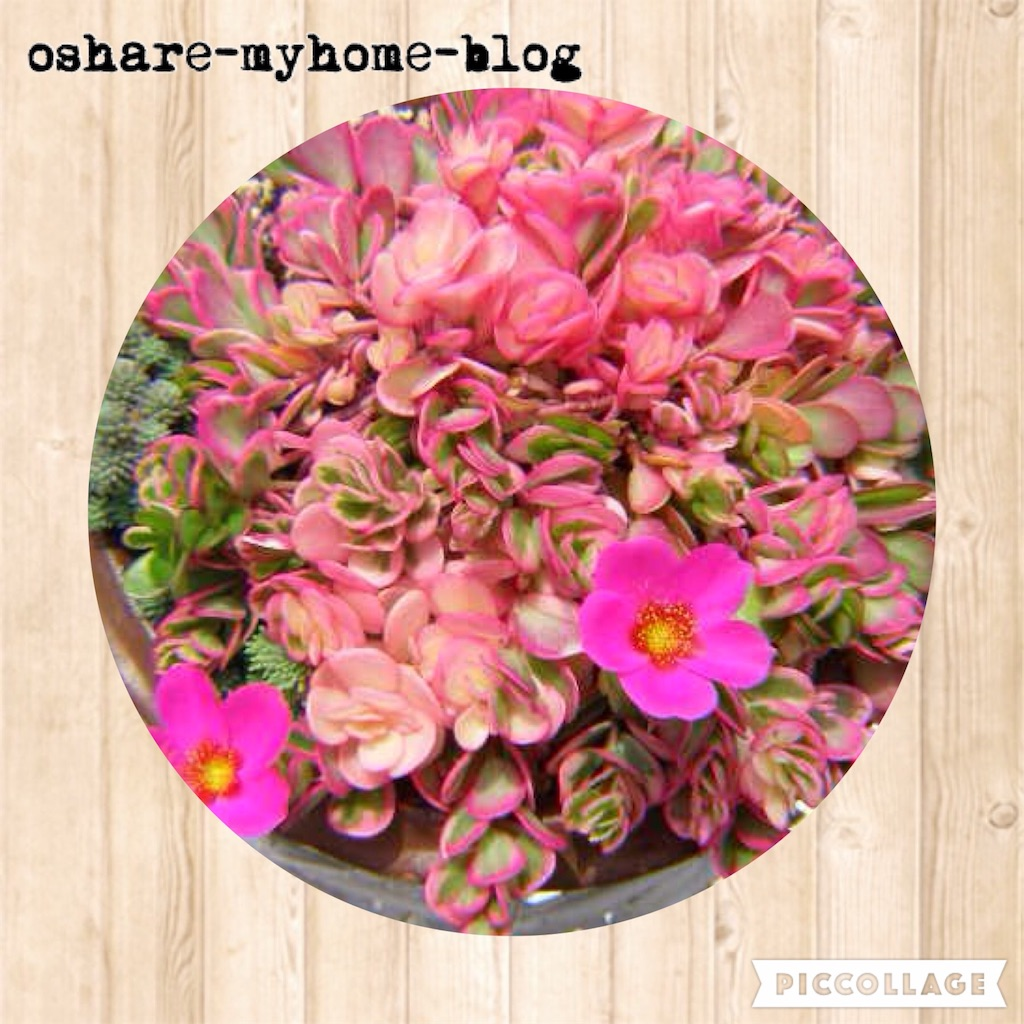 f:id:oshare-myhome-blog:20160530220550j:image