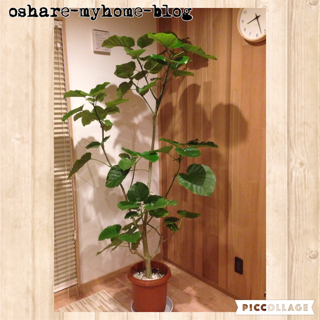 f:id:oshare-myhome-blog:20160929000221j:image