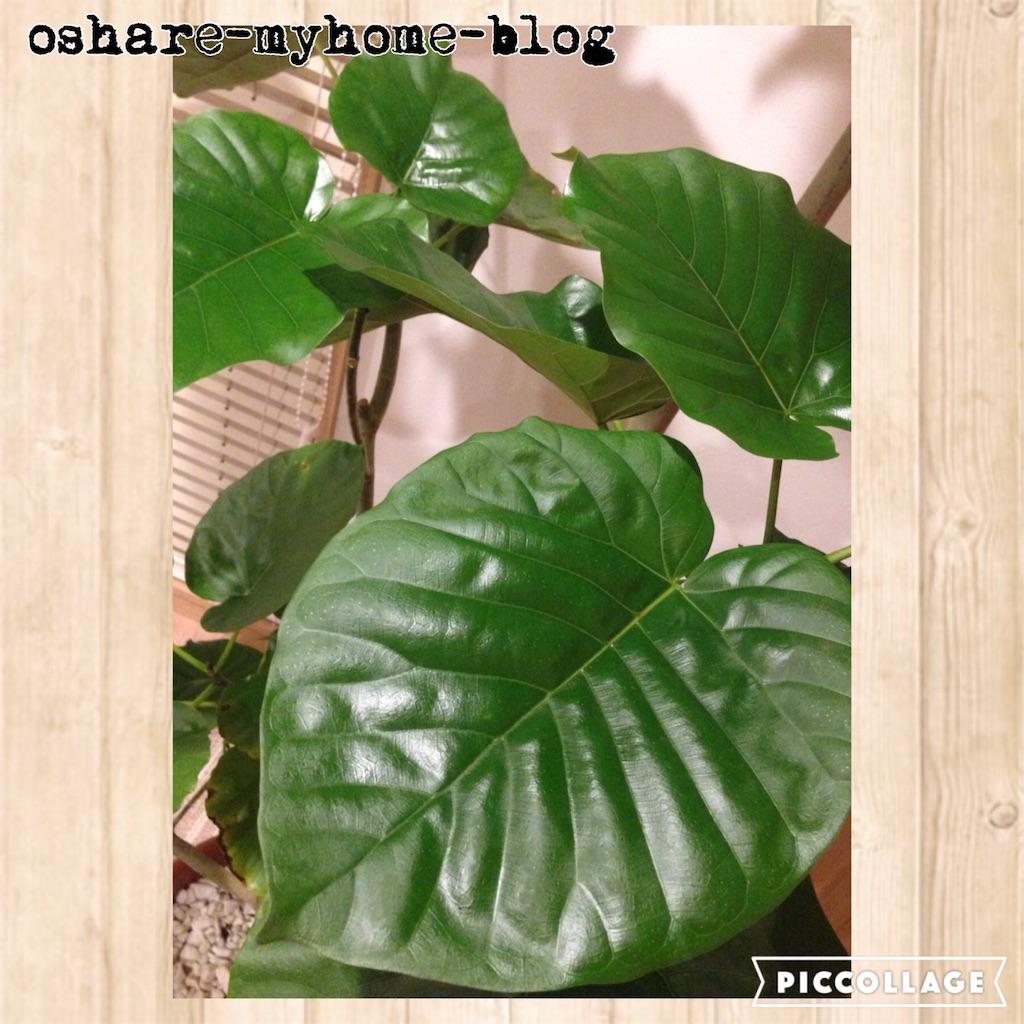 f:id:oshare-myhome-blog:20160929000229j:image