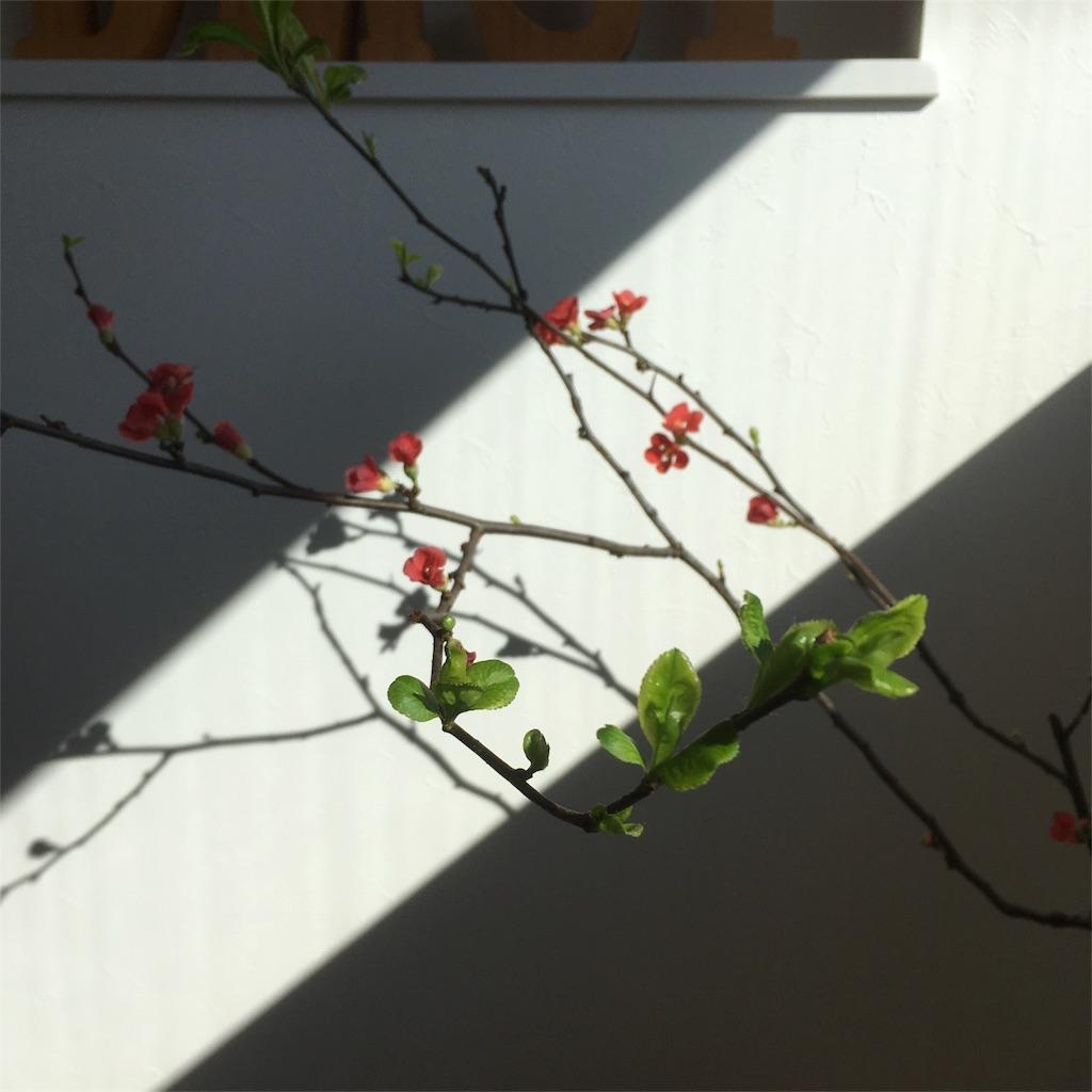 f:id:oshare-myhome-blog:20180216150323j:image