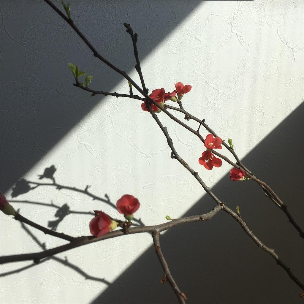 f:id:oshare-myhome-blog:20180216150342j:image