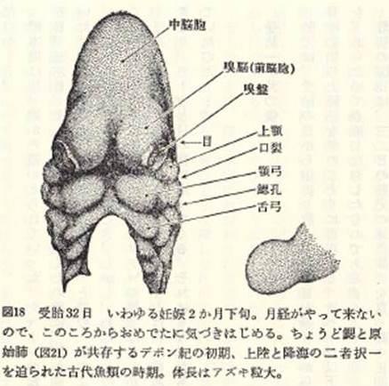 f:id:oshimayukinori:20141023154203j:image:w300:left