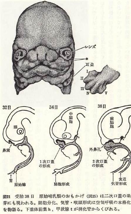 f:id:oshimayukinori:20141023154300j:image:w360:left