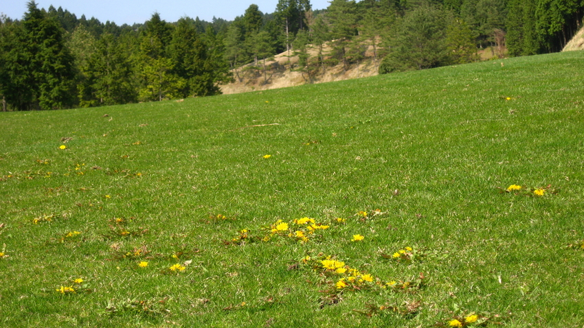 野芝の種というのも売られておりますが | sibafunokurokoの コース ...