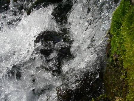 f:id:osino-suizokukan:20090316153714j:image
