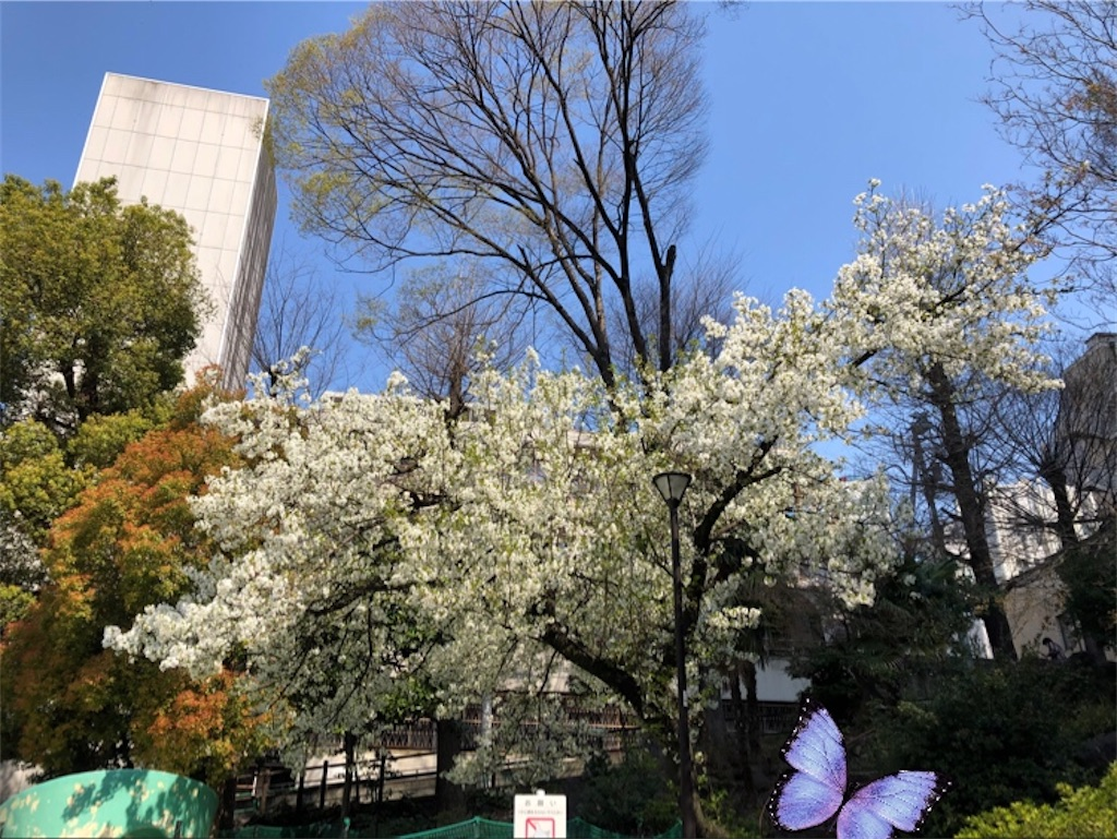 f:id:osusidaisukiharukadesu:20200326215321j:image