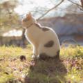 [猫][逆光][フレア]