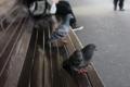 [動物][鳩][ベンチ]電車待ち