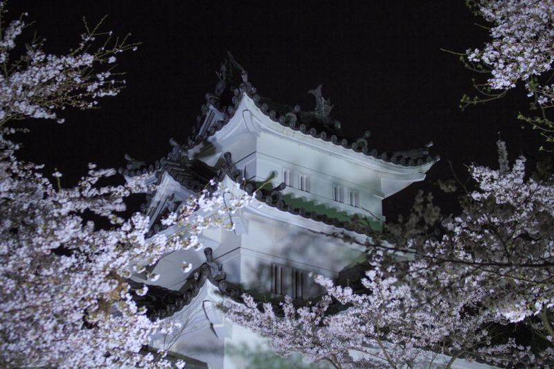 夜桜と城郭