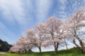 [桜][桜並木][空]超広角