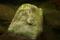オオサンショウウオっぽい岩