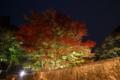 [紅葉][ライトアップ]河内渓谷3