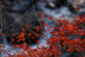 [紅葉][秋]日本の秋