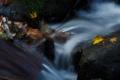 [赤目四十八滝][秋][川]渓谷秋深し