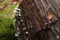[赤目四十八滝][秋][キノコ]森のキノコに…
