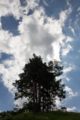 [木][雲][空]Above The Treetops
