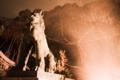 [狛犬][火の粉]雷光の如く