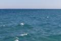 [海][波]波のウサギ