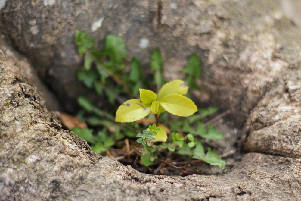 植物に関する組み写真
