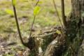 [緑][木]突出する生命2
