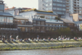 [鴨川][京都]鴨川の人々3